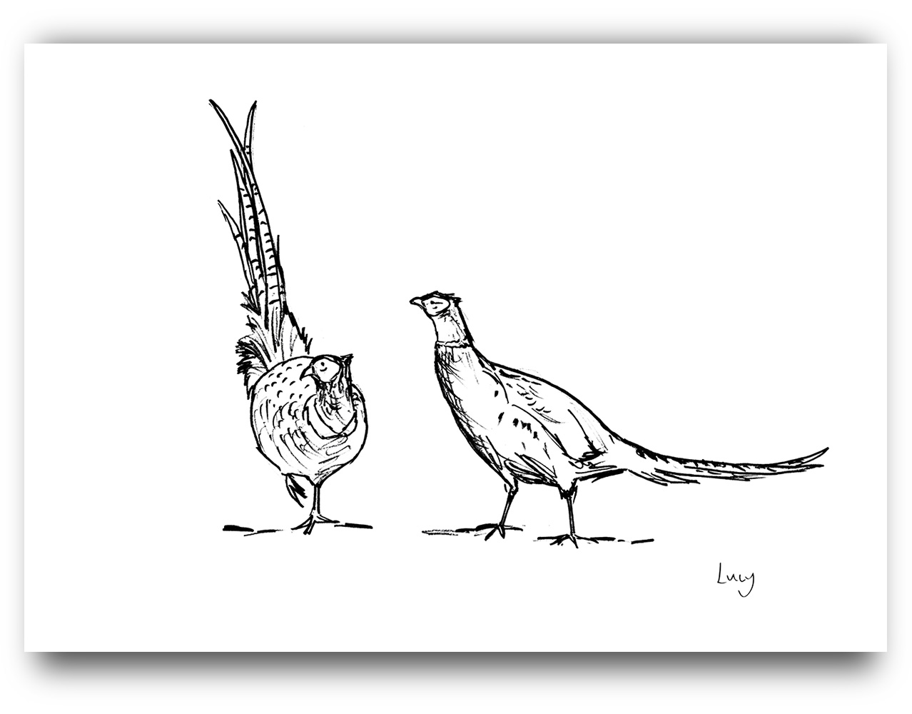 Cheeky Animals - Pheasants